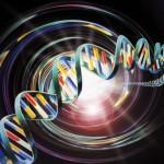 L'innesto del Gene che ha modificato il Dna umano