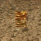 Marte oggetto -  (2)