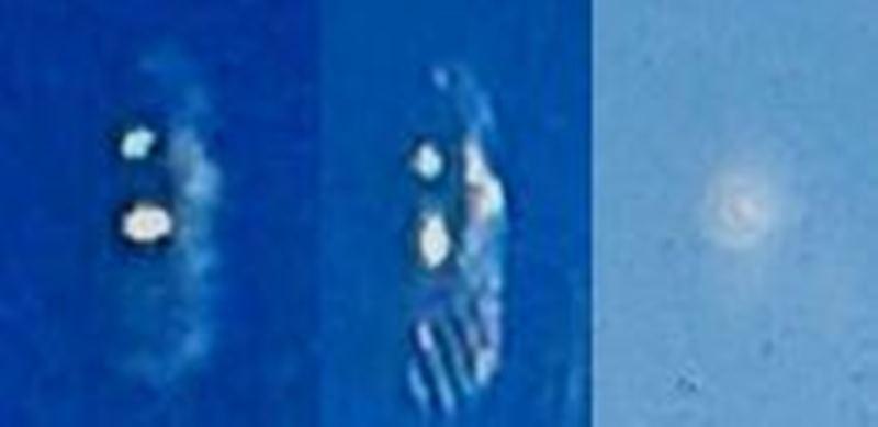 Ufo di Benevento. Foto collage. Un ufo oppure semplici riflessi? Ci sono buone probabilità che fosse proprio l'ufo, immagine molto disturbata viste le condizioni in cui sono state scattate le foto.Diciamo questo in quanto l'ufo ci è stato descritto come piuttosto luminoso.