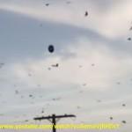 In questo fermo immagine si nota l'ufo a forma ovoidale posto verticalmente, attorniato da una miriade di volatili.
