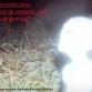 ufo podda alieno