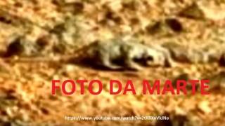 UFO MARTE RETTILE
